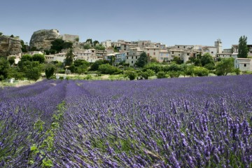 Draguignan and Lorgues: truffles, lavender, Côtes de vin Provences